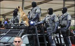 Собаки на службе в вооруженных силах Бельгии