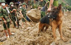 Собаки на службе в вооруженных силах Вьетнама