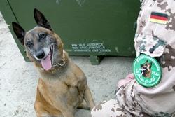 Собаки на службе в вооруженных силах Германии