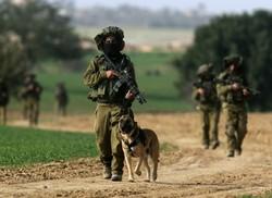 Собаки на службе в вооруженных силах Израиля