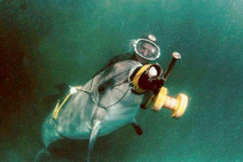 Боевые дельфины (c) delfinariy-chelny.ru