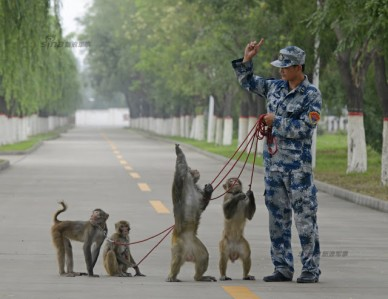 PLAAF's way of preventing bird hits using bird hunting falcons and nest destroying monkeys 10